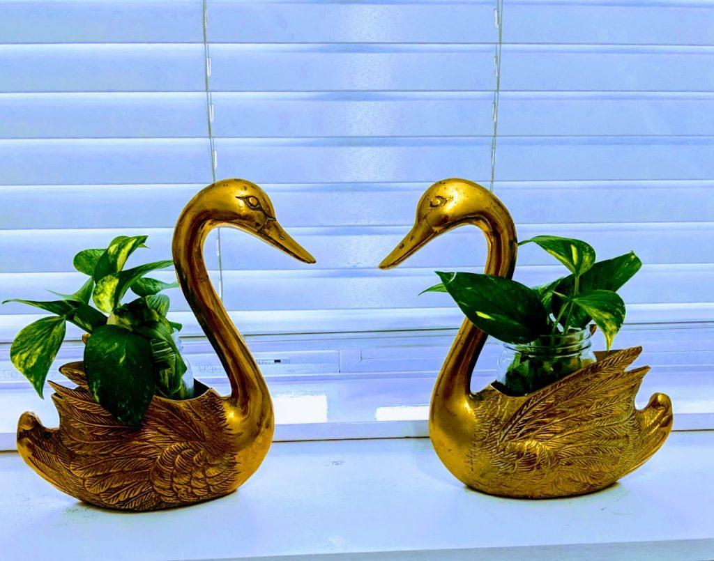 copper swans